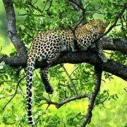 Kruger Park Safari Angebot